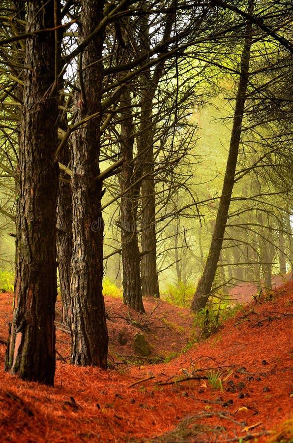 Natura della foresta della Spagna immagine stock libera da diritti