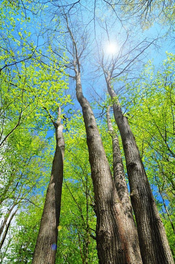 Natura della foresta della primavera immagini stock libere da diritti