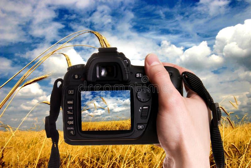 Natura della foto fotografia stock libera da diritti