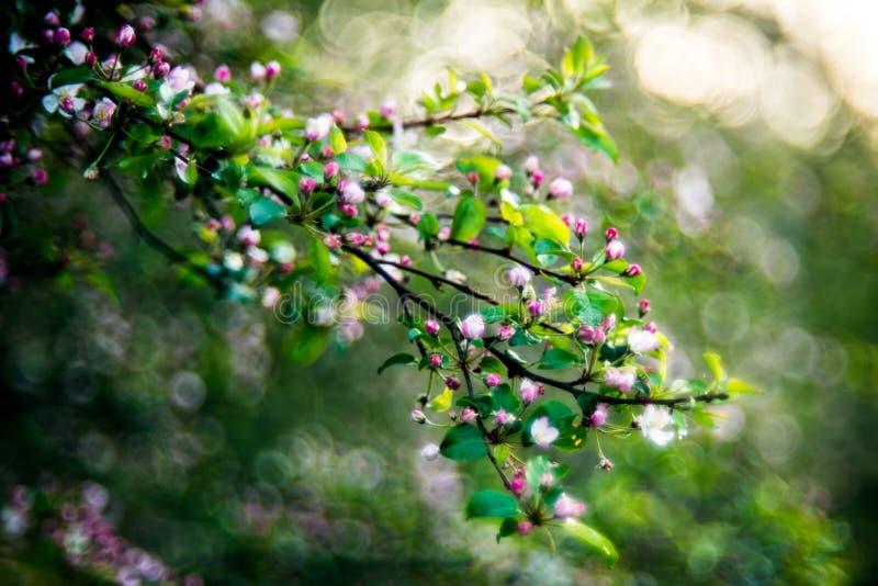 Natura della primavera in fioritura fotografia stock