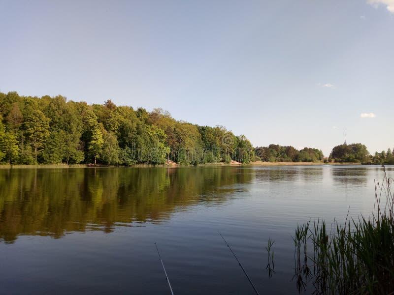 Natura della primavera nel lago fotografie stock libere da diritti