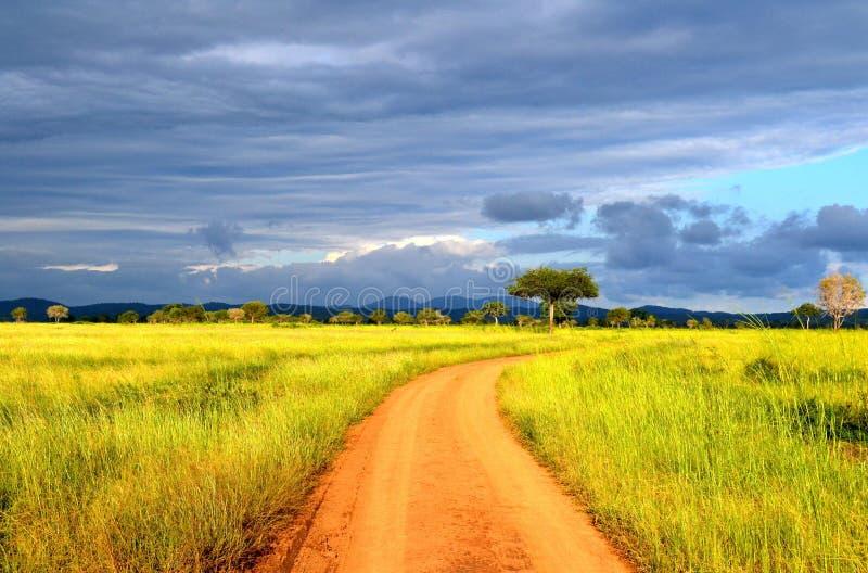 Natura della savana fotografia stock
