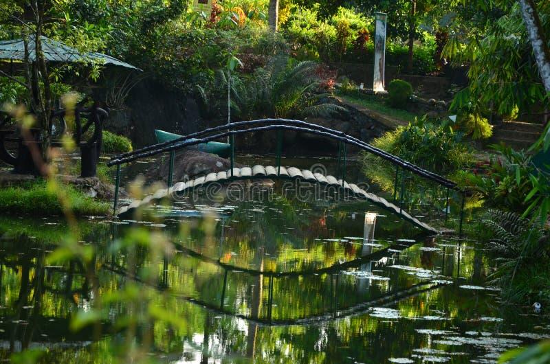 Natura dello Sri Lanka - stagni naturali fotografie stock
