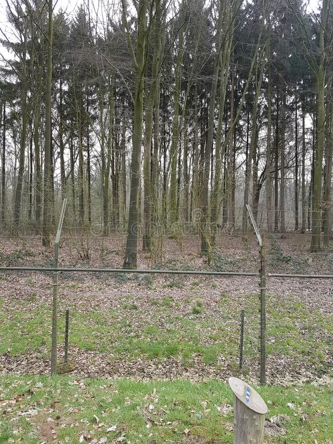 Natura di animali della foresta immagine stock libera da diritti