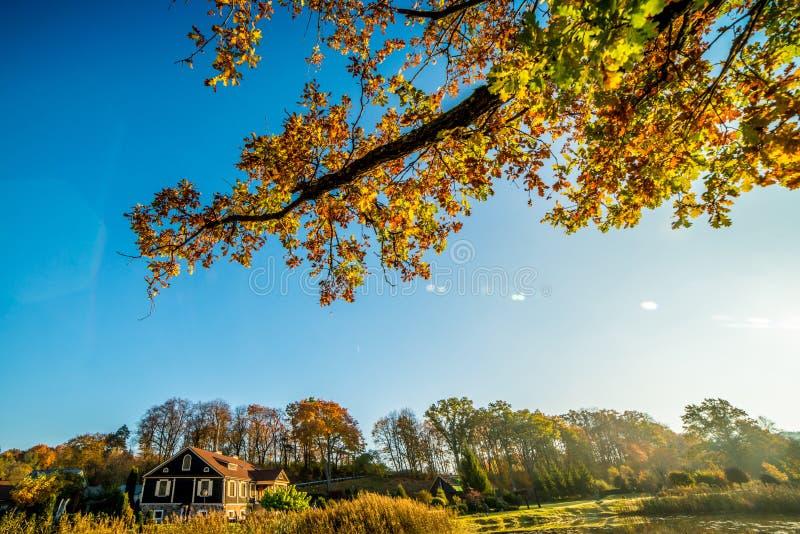 natura di autunno, ramo di albero e una casa immagine stock