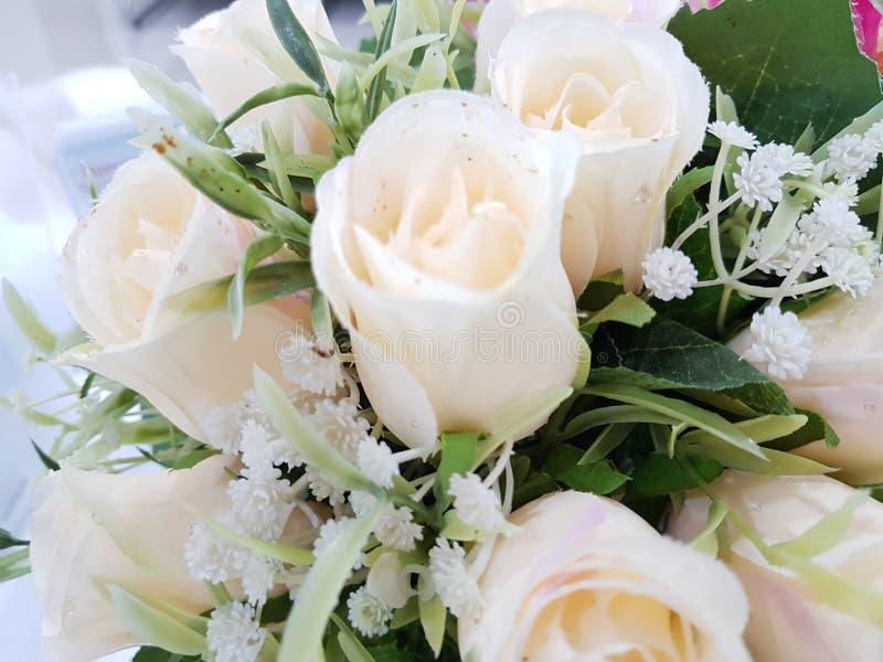 Natura di bellezza del fiore bianco di Rosa immagini stock