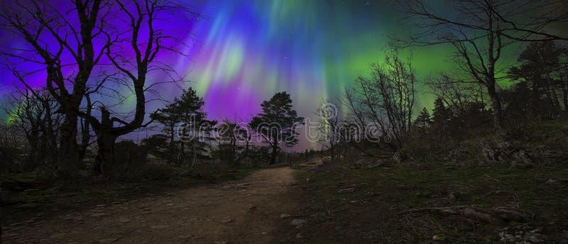 Natura di bellezza del Nord all'inizio dell'autunno fotografia stock