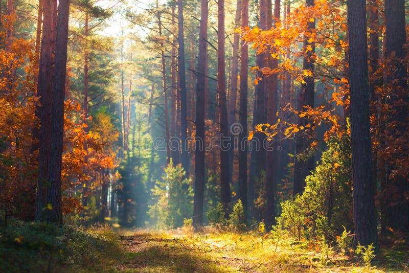 Natura di caduta della foresta di autunno Fondo pittoresco di autunno fotografia stock libera da diritti