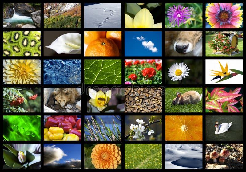 Natura di Digitahi fotografia stock libera da diritti