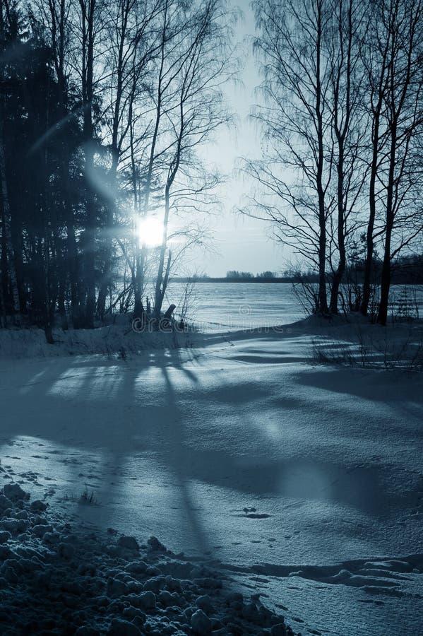 Natura di inverno, foresta di notte fotografia stock libera da diritti