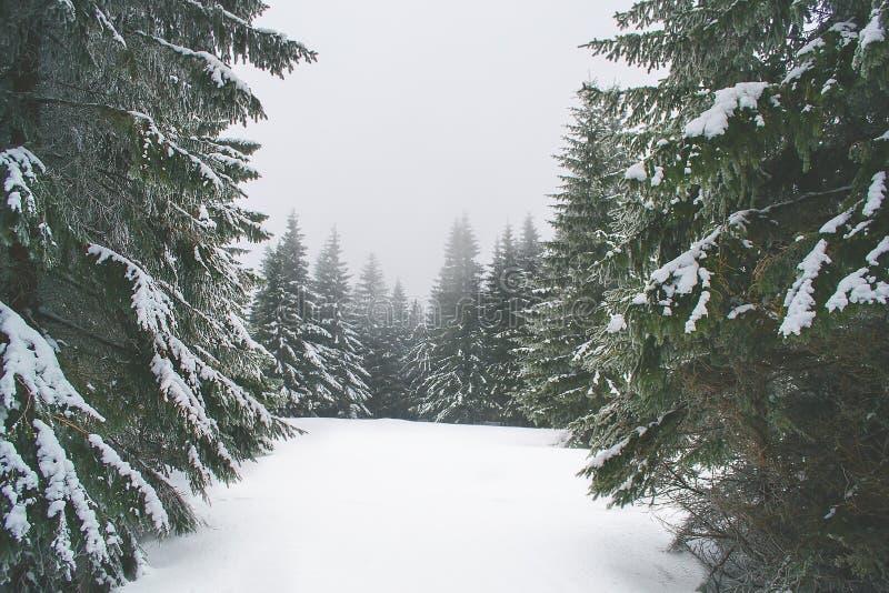 Natura di inverno nelle montagne giganti immagine stock