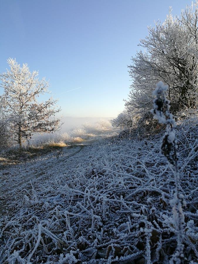Natura di inverno in repubblica Ceca fotografia stock libera da diritti