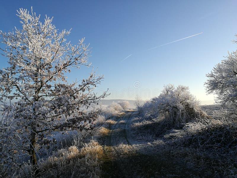 Natura di inverno in repubblica Ceca immagini stock libere da diritti