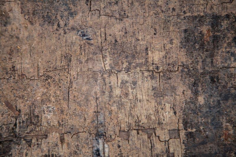 natura di legno del fondo di struttura fotografia stock