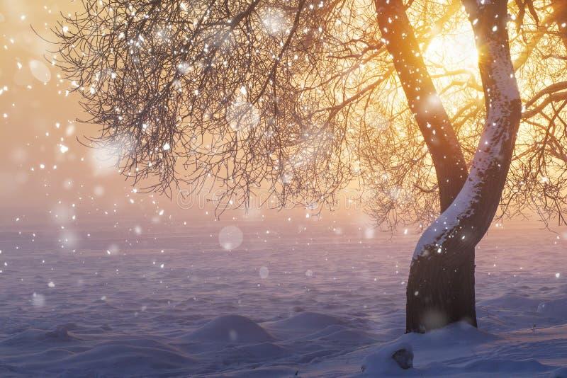 Natura di Natale con i fiocchi di neve Inverno Sole luminoso nella mattina gelida nebbiosa ad alba Priorità bassa di natale fotografia stock