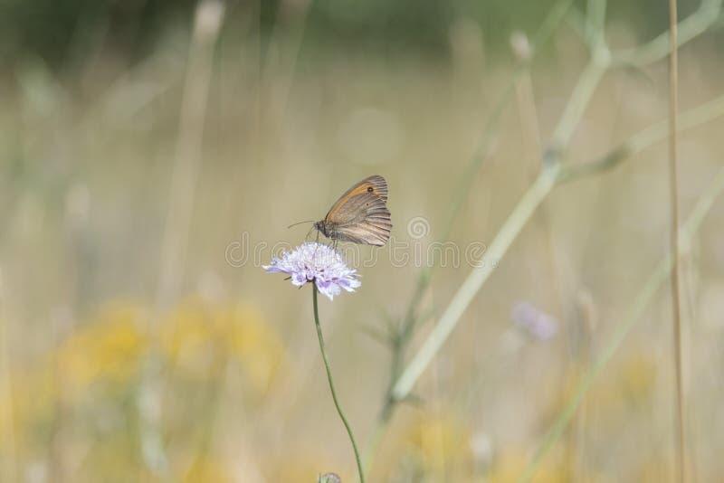 Natura di Sun del cielo blu della farfalla fotografie stock libere da diritti