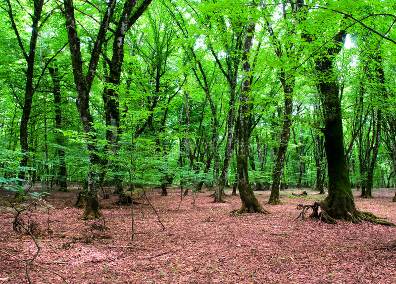 natura di verde di foresta di concetto fotografia stock libera da diritti
