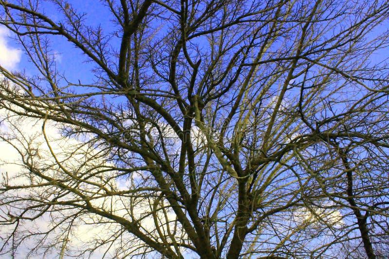 Natura ed alberi nella molla in anticipo immagine stock libera da diritti
