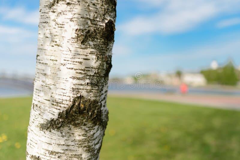 Natura ed albero sull'acqua e sul prato piacevoli fotografia stock