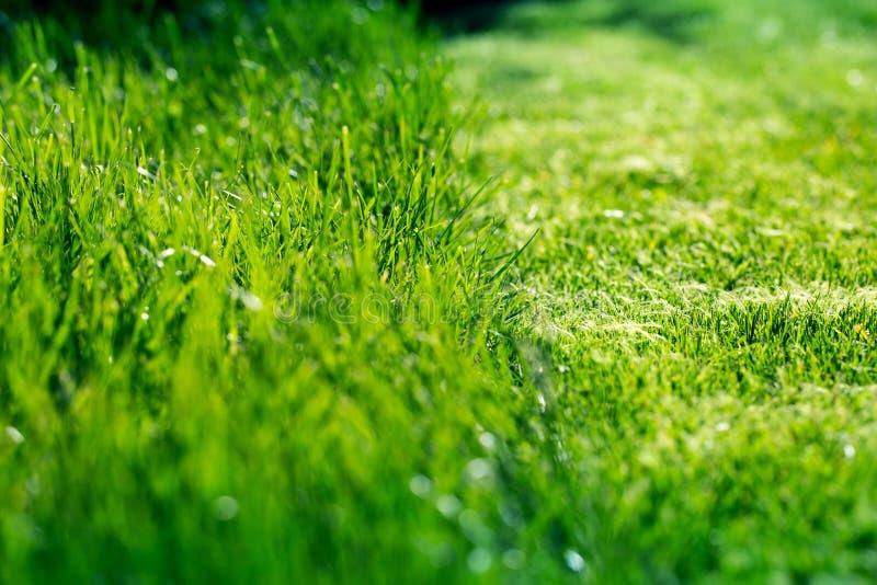 Natura ed erba falciata fotografia stock