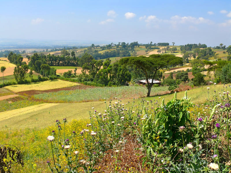 Natura etiopica del paesaggio. Il villaggio nella valle. L'Africa, E fotografia stock