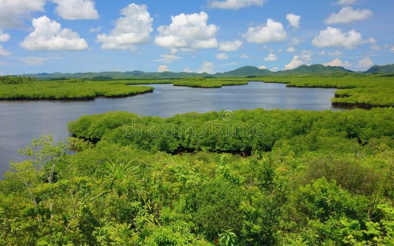 Natura filippina - mangrovie fotografie stock