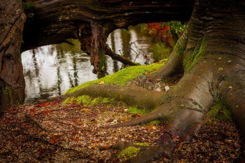 Natura - fiume II fotografie stock