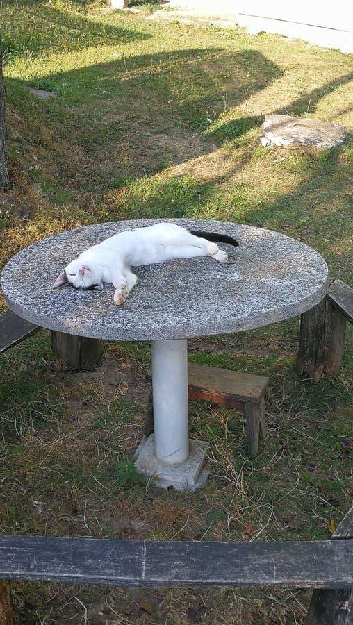 Natura fredda dello scrittorio del gatto fotografia stock libera da diritti