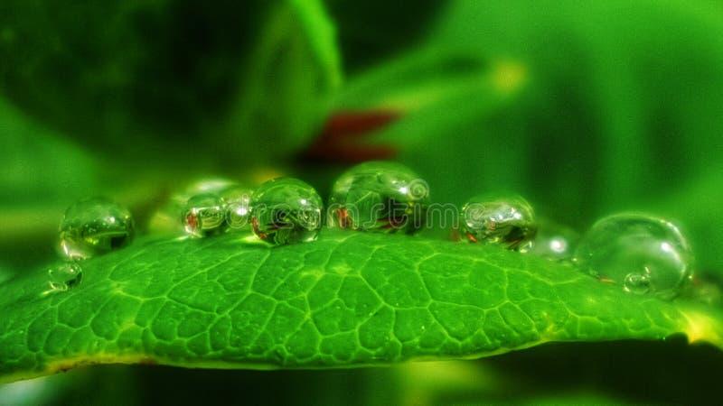 Natura fresca di verde del waterdrop di goccia fotografia stock