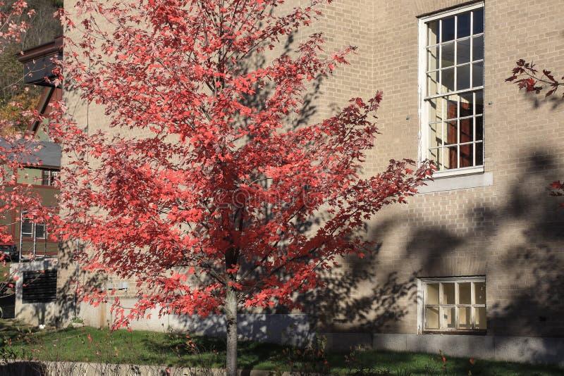 Natura i miasto Czerwona jesień obraz royalty free