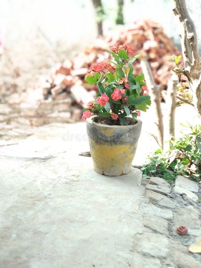 Natura impressionante di vista della pianta del fiore fatta immagine stock