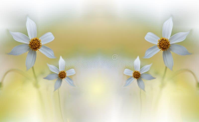 Natura incredibilmente bella Fotografia di arte moderna Progettazione di fantasia Priorità bassa creativa Fiori bianchi variopint fotografia stock libera da diritti