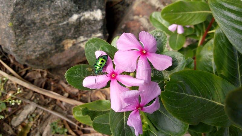 Natura, insekt, kwiat zdjęcie stock