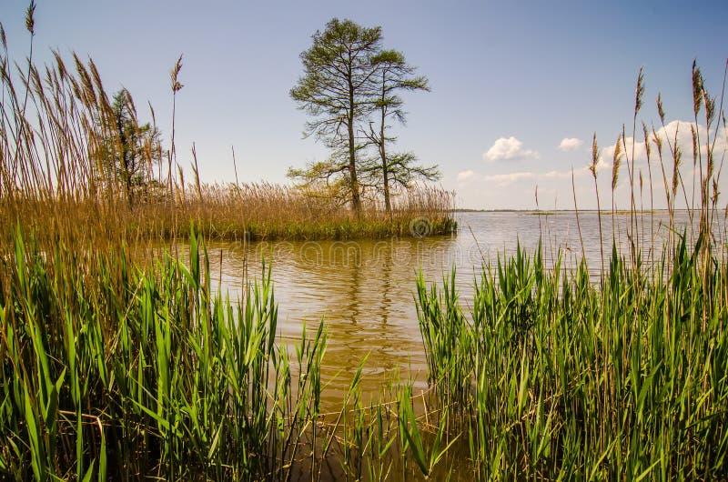 Natura intorno al lago del mattamuskeet immagini stock