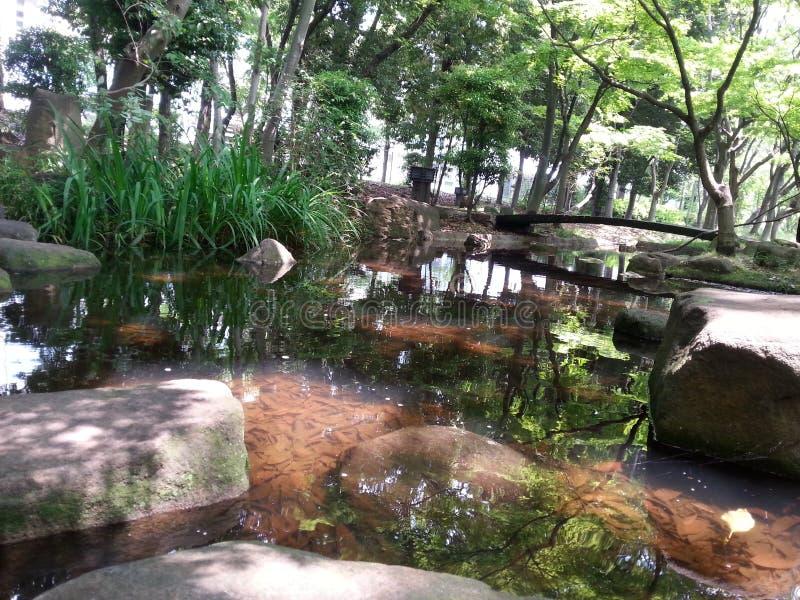 Natura Japonia fotografia royalty free