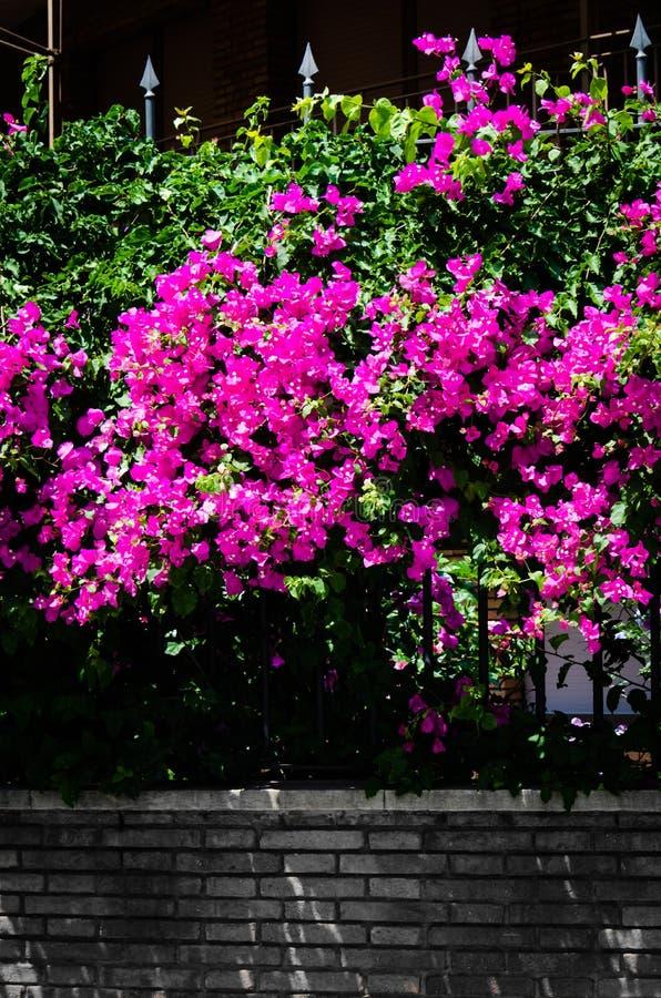 Natura jest Purpurowa fotografia royalty free