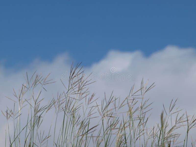 Natura Jest Wyniosłym koncernem Od ziemi Up fotografia royalty free