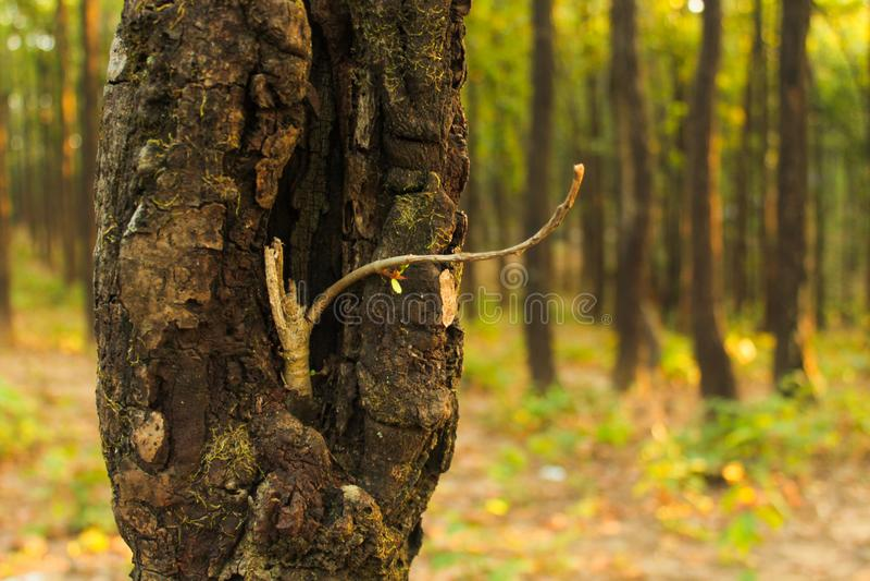 Natura karmi naturę i gacenie, obrazy stock