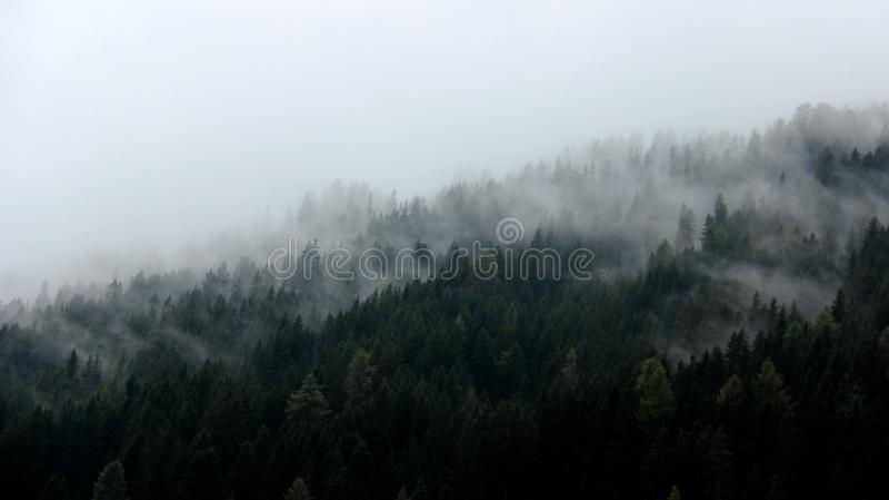 Natura kolory Ranek mgły pokrywy sosny las zdjęcie royalty free