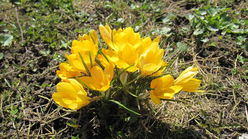 Natura kwiat zdjęcia royalty free