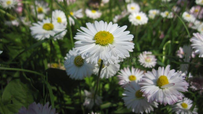 Natura kwiat obrazy royalty free
