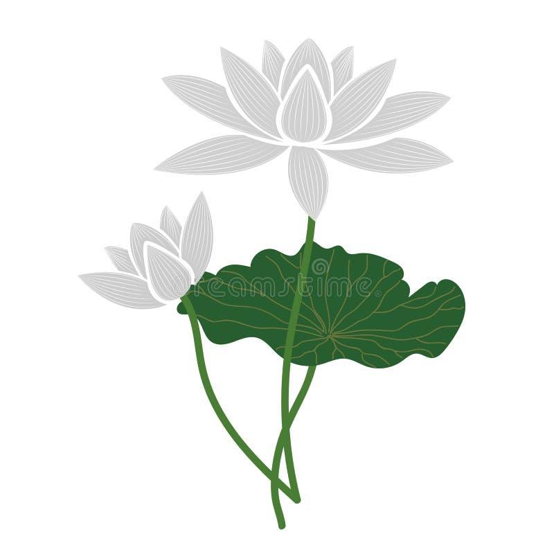 Natura kwiatu biały lotos ilustracji