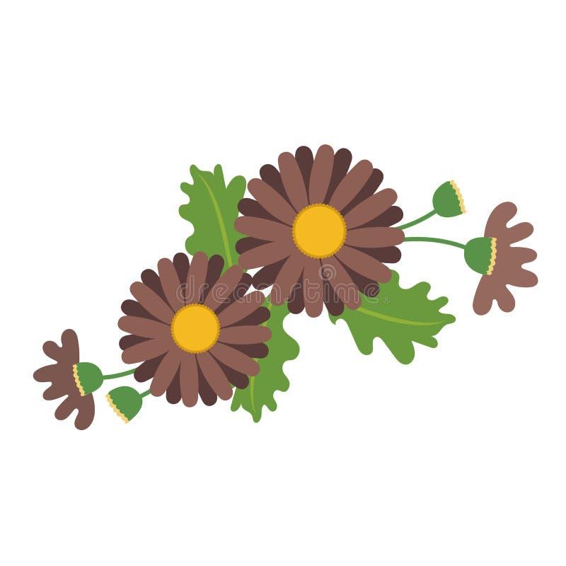 Natura kwiatu brązu stokrotka royalty ilustracja