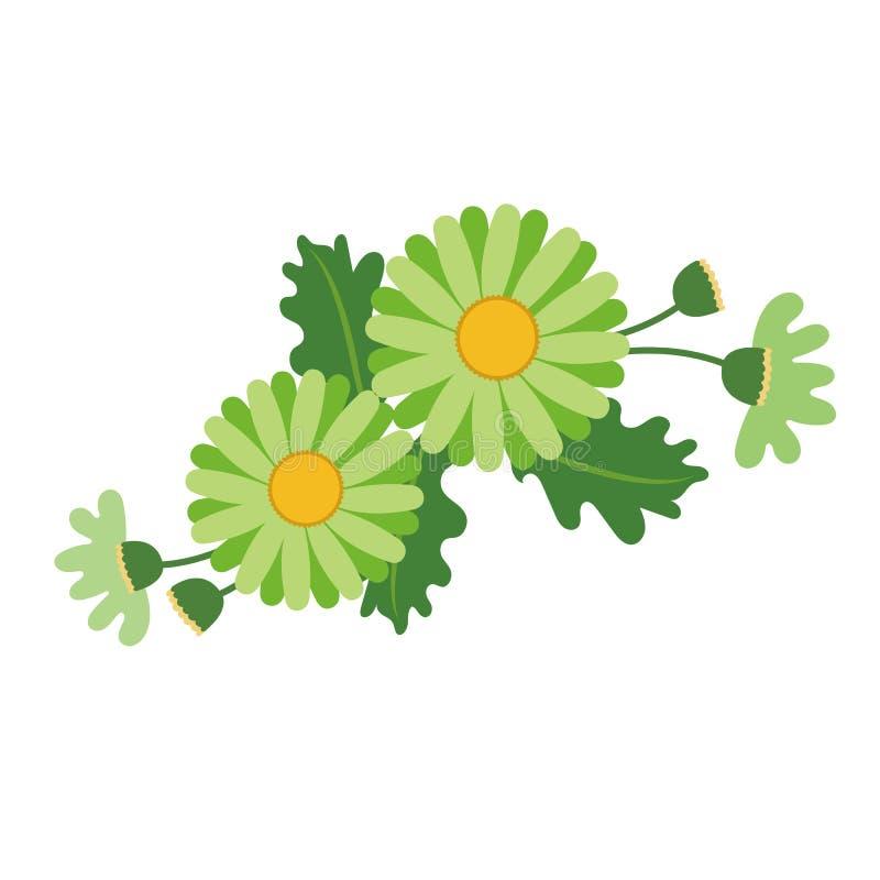 Natura kwiatu zieleni stokrotka ilustracja wektor