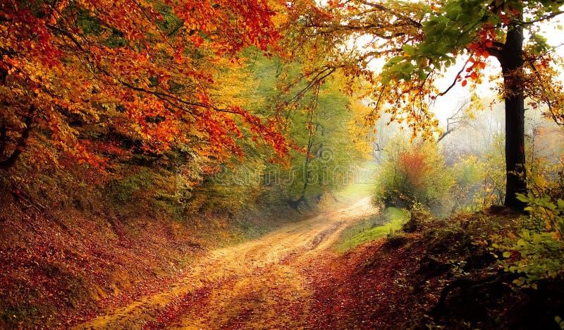Natura, Las, Jesień, Las Bezpłatna Domena Publiczna Cc0 Obraz