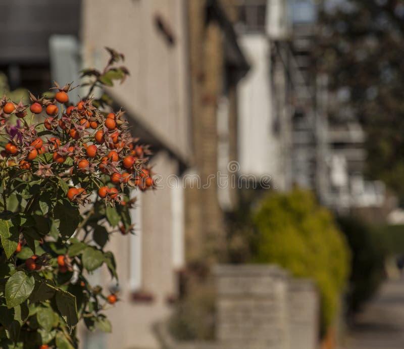 Natura a Londra - vie in autunno fotografia stock