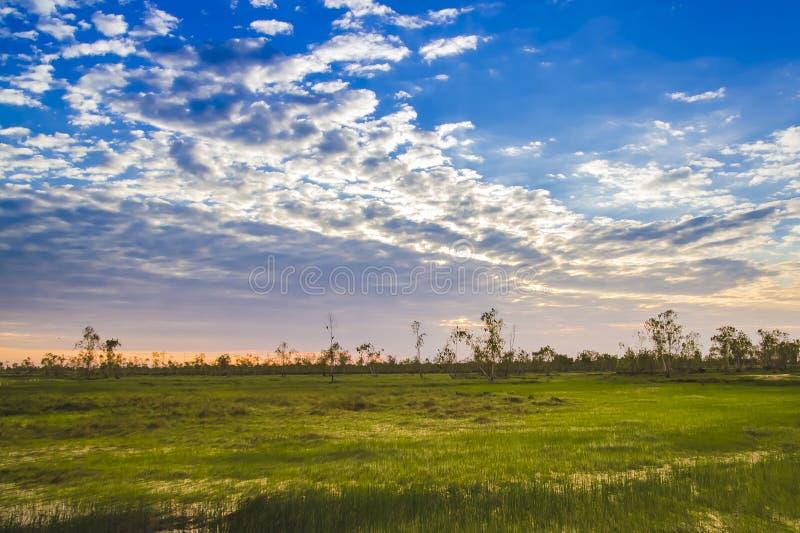 Natura luminosa del paesaggio con cielo blu, la nuvola, l'albero verde e il gol fotografia stock libera da diritti