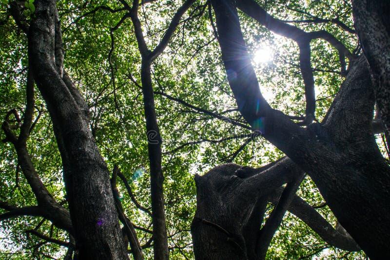 Natura luminosa nel giorno con il sole fotografia stock