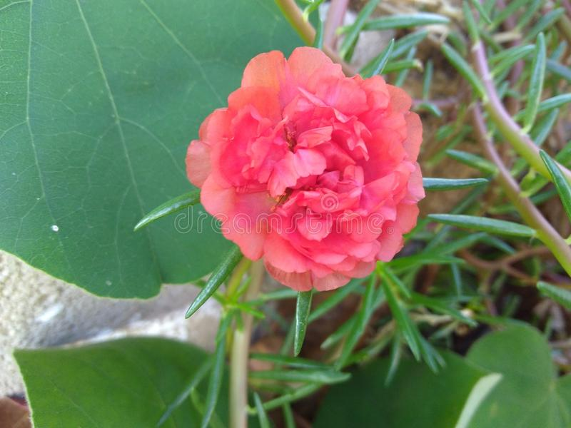 Natura mój swój ogród zdjęcie royalty free