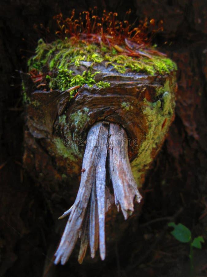Natura magica fotografia stock